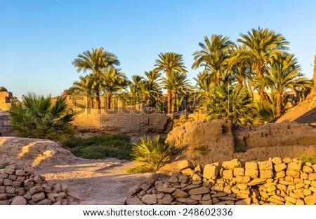 Vegetation in the Karnak Temple Complex - Luxor, Egypt - stock photo