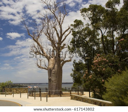 Vegetation kimberley northern region western australia stock photo vegetation of the kimberley northern region of western australia growing in kings park perth includes publicscrutiny Image collections