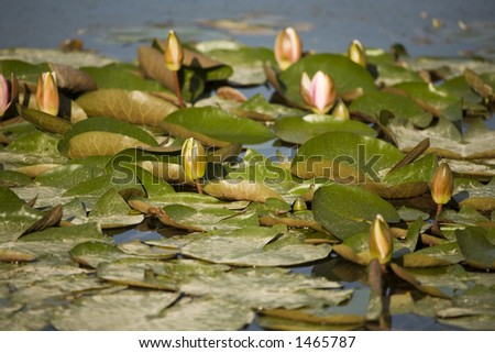 vegetation on a small lake during spring time on the evening