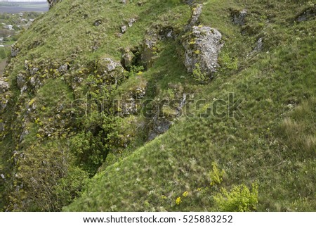 Vegetation on the rocky slopes. Close up of plants and rocks on the slope.