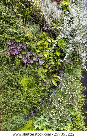 vegetation texture, vertical garden - stock photo