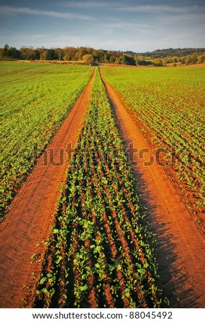 vehicle tracks through new crop in field on farm - stock photo