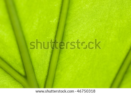 Veined light green leaf - stock photo