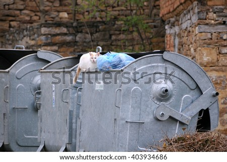 VELIKO TARNOVO, BULGARIA - MARCH 15, 2016: Stray cat sits on the garbage container - stock photo