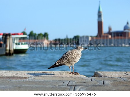 venice, seagull in Piazza San Marco and the church of St. George in the Venetian lagoon - stock photo