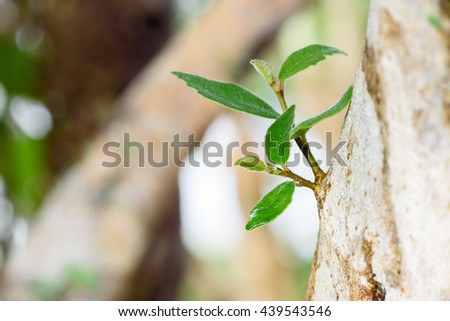 Verdant sprout growing on bark tree. A symbol / concept of new beginning of things i.e. era, services, business, entrepreneur, chance, hope, life, future, investment, success, love, idea, method, etc