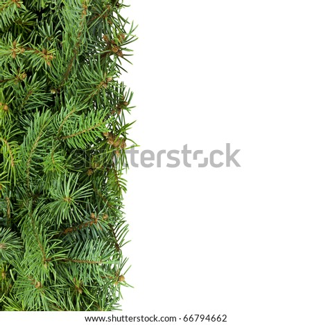 Vertical border of spruce branches against white. - stock photo