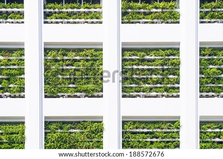 vertical garden - stock photo