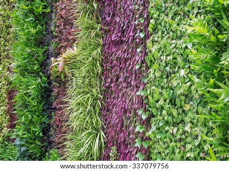 vertical garden natural green leaf texture. - stock photo