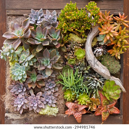 Vertical garden with succulents in a wooden planter box