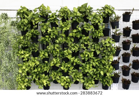 vertical green plant pattern in many black pot  - stock photo