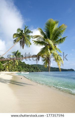 Vertical image of an ideal tropical, palm tree lined beach with turquoise water and a big blue sky. - stock photo
