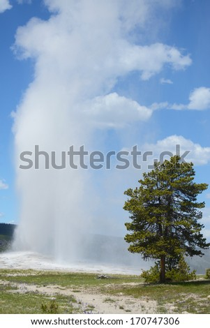 Vertical Old Faithful Geyser blows off steam in Yellowstone. - stock photo