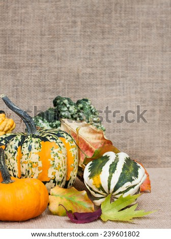 vertical orientation close up of colorful gourds, squash and pumpkins with fall leaves, against a neutral, burlap background, with copy space / Colorful Harvest Squash - stock photo