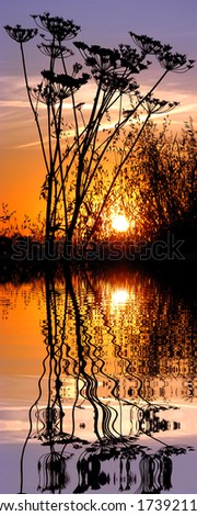 Vertical panoramic of sunset with silhouette umbellifer flowers and large grass above water with reflection, digital effect - stock photo