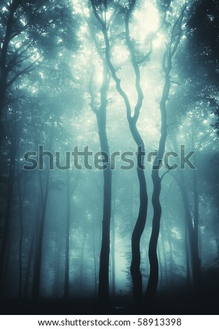 vertical photo of trees in a forest with fog - stock photo