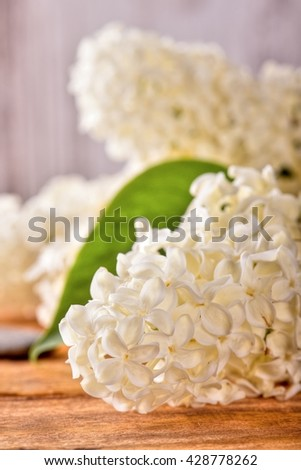 Vertical photo with several flowers of lilac. Single green leaf on lilac blooms. White lilac blooms. Flowers with grey stone placed on wooden board. Grey stone next to flowers. - stock photo