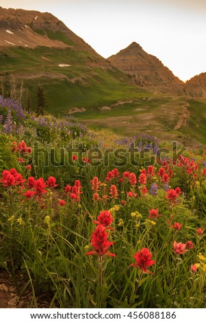 Vertical red wildflower image from the Wasatch Mountains, Utah, USA. - stock photo