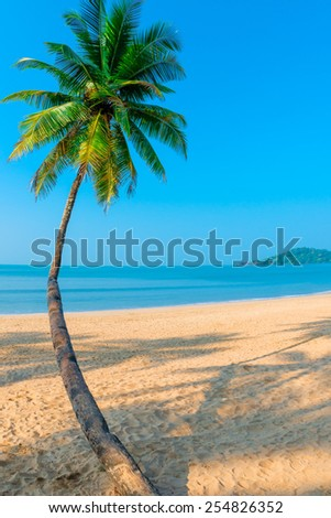 Vertical shot curved coconut palm on the sea background - stock photo