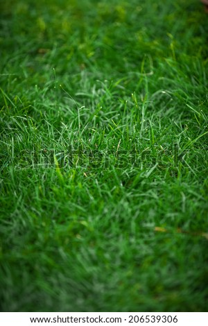 Vertical shot of uncut fresh green grass - stock photo