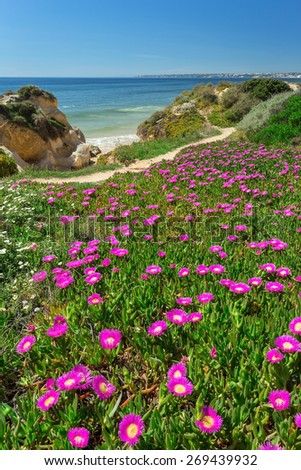 Vertical spring landscape beach Gale. Albufeira Portugal . - stock photo
