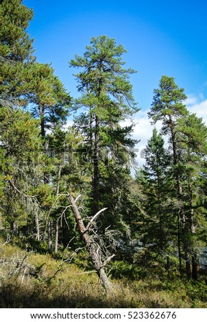Vertical view of a forest scene with blue sky, Falcon Lake Provincial Park