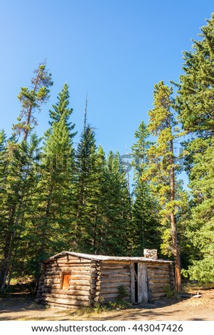 Vertical view of an abandoned homestead cabin in a forest near Buffalo, Wyoming