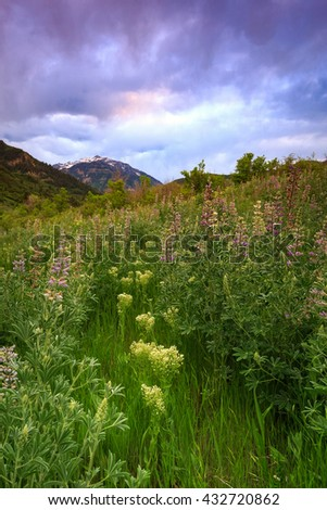Vertical wildflower image in Provo Canyon, Utah, USA. - stock photo