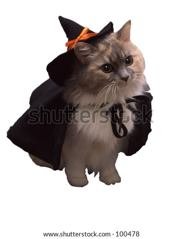 Vertical witch cat. - stock photo