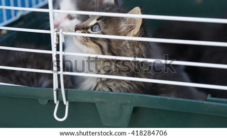 Very cute kitten in a cage