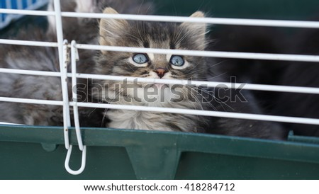 Very cute kitten in a cage - stock photo