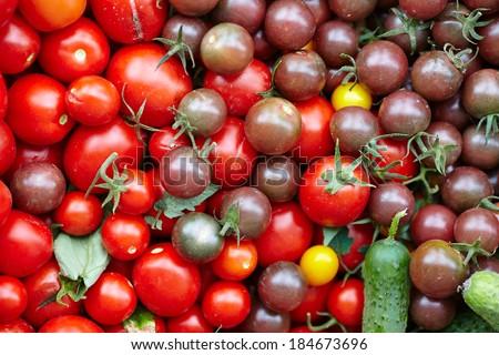 very fresh tomatoes and cucumbers - stock photo