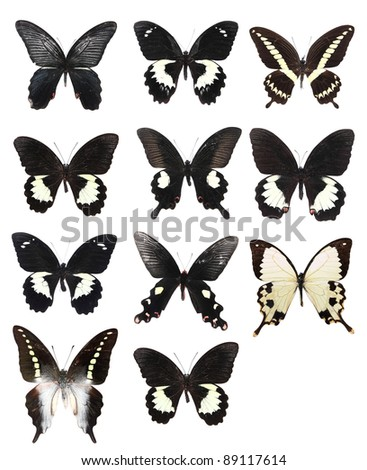 Very Many black butterflies isolated on white background - stock photo