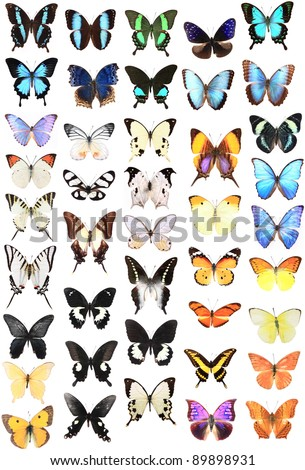 Very Many blue of red and brown butterflies - stock photo