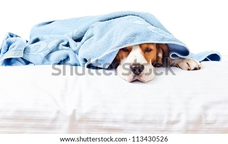 Very much sick dog , isolated on a white background.