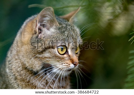 very nice close-up portrait of small cat baby with shallow focus