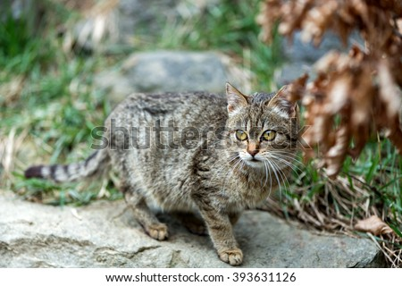 very nice portrait of small cat baby playing outdoor with shallow focus