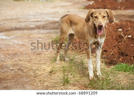 Very poor and thin alley dog in Greece - stock photo