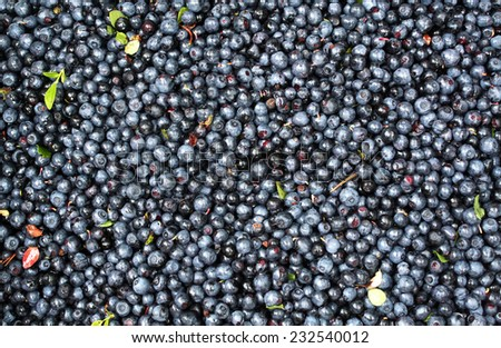 Very ripe fresh blueberries background texture