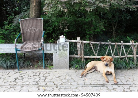 Very sad dog in front of wooden fence - stock photo