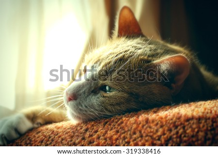 Very Sad Red Cat. Nostalgy. Sunny Day.  - stock photo