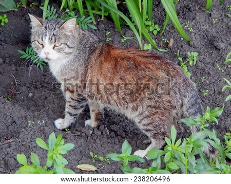 Very serious cat-male nature. - stock photo