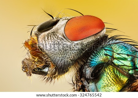 Very sharp and detailed study of Fly head stacked - stock photo