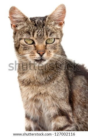 very ugly house cat portrait