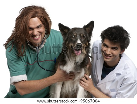 Vet and intern examining a border collie with a stethoscope in front of white background