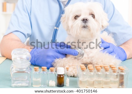 Vet checking a little Maltese dog with a stethoscope - stock photo