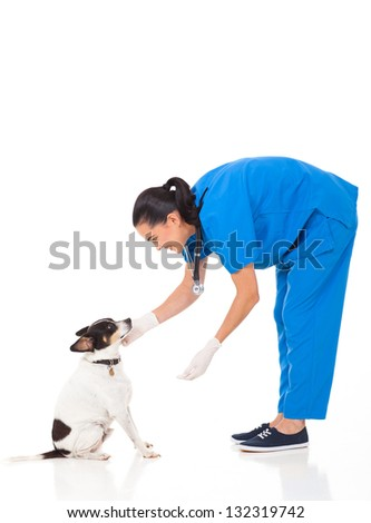 vet doctor playing with dog isolated on white background - stock photo