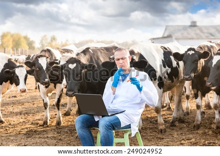 Vet  Doctor with laptop studying liquid sample contained in a test-tube on  farm cows - stock photo