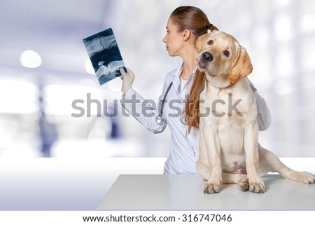 Vet dog. - stock photo