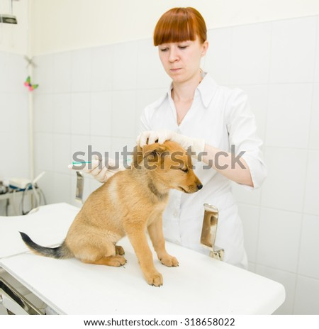 vet doing vaccination dog - stock photo